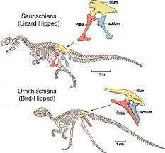 dinosaur classifications - Google Search