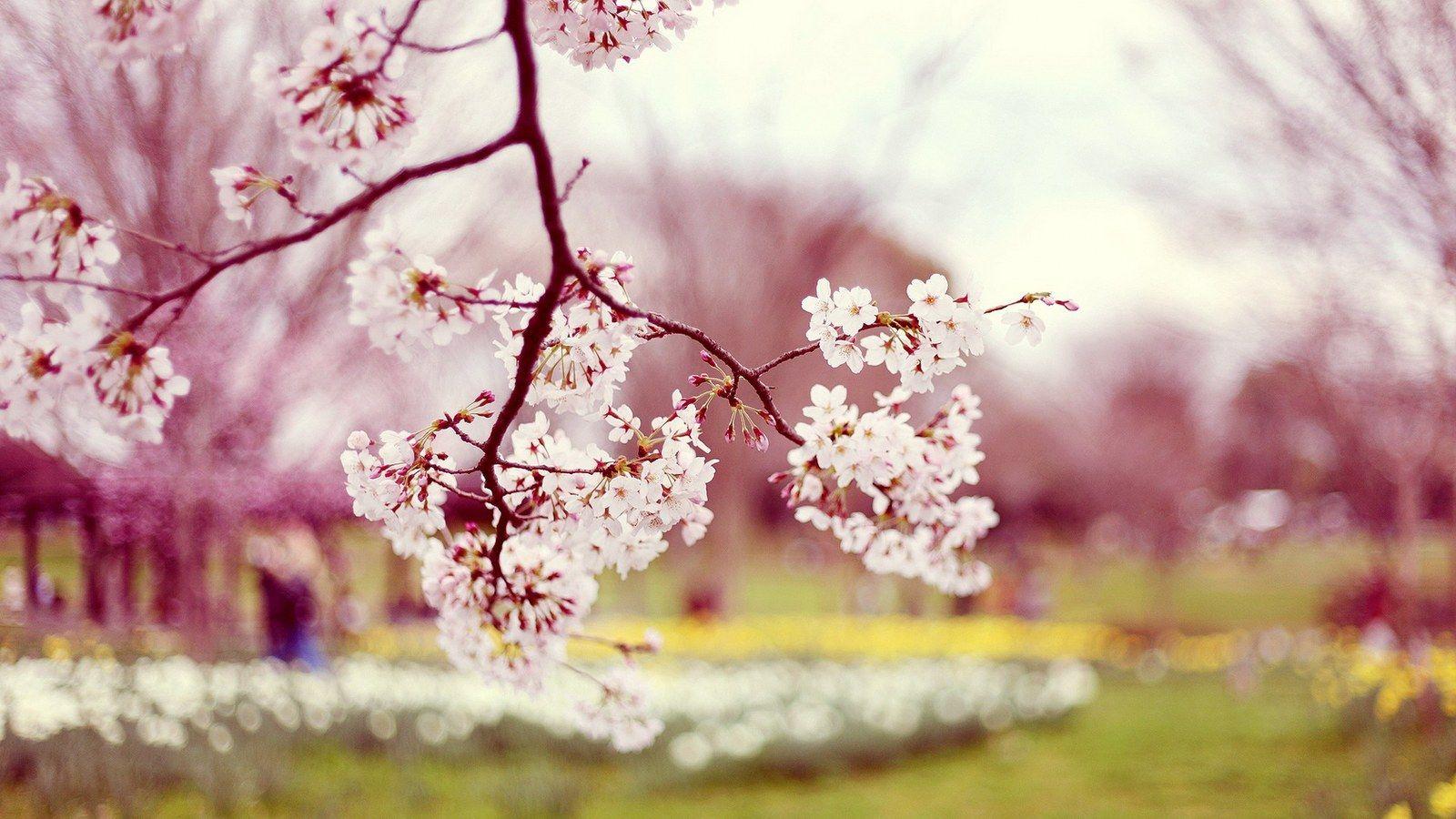Autumn Flower Pink Natural Wedding Pinterest Spring Wallpaper