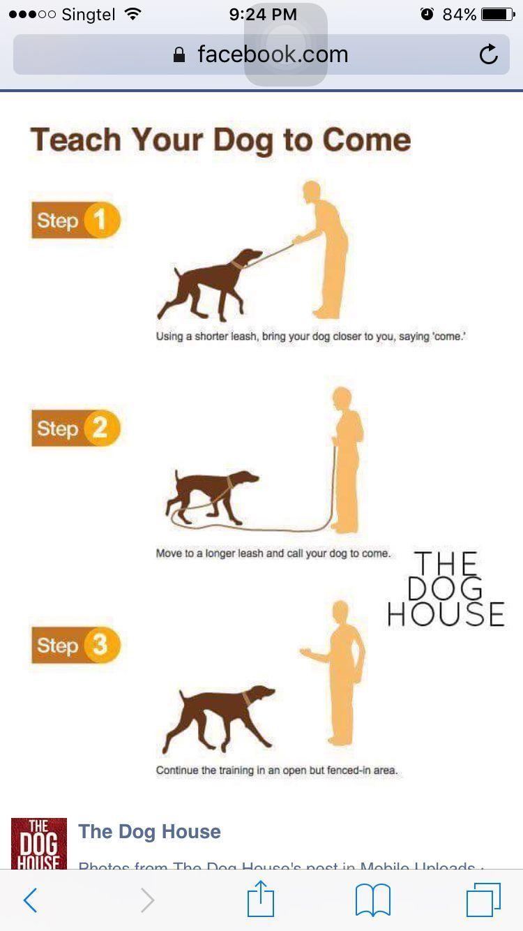 Industrious Dog Costumes Shih Tzu Dogged Dogstuffbath 2020
