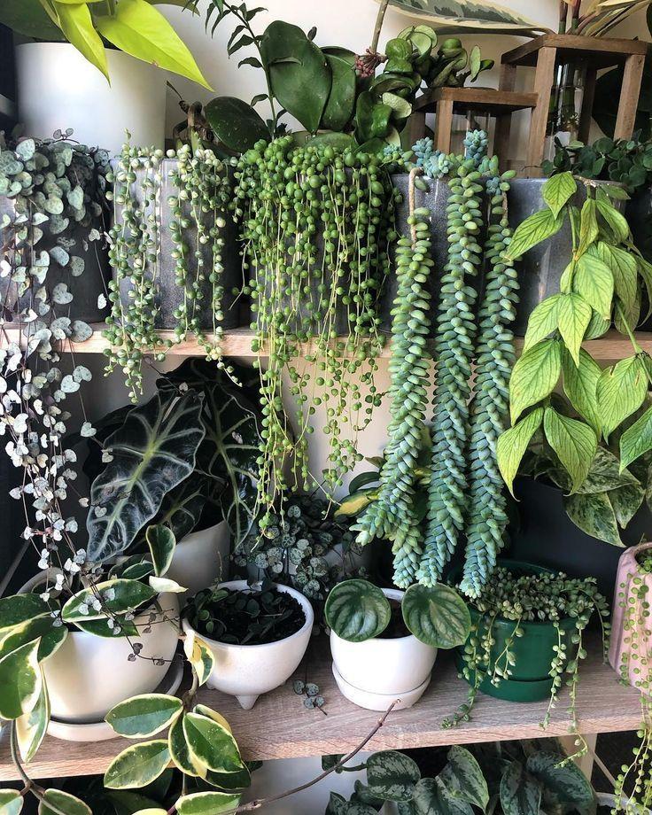 Wunderschöne grüne Pflanzen. #innen #pflanzen #wiederversorgen #feminine #energie #patioplants