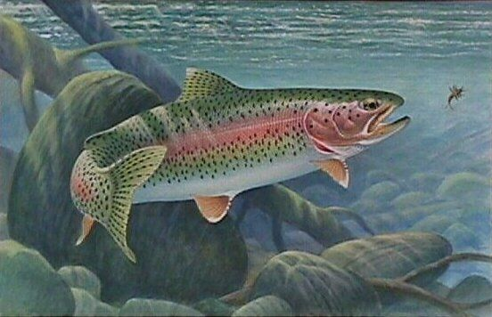 The lake fish i remember most was the gorgeous rainbow for How to fish for rainbow trout