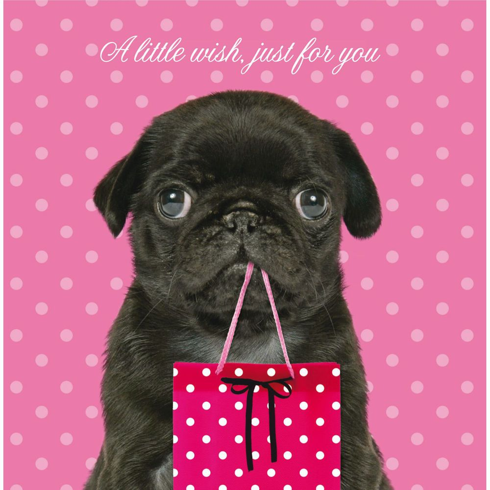 Black Pug Birthday Card Available At Www Ilovepugs Co Uk Post