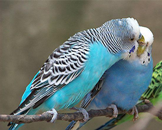 Pin On Beautiful Love Birds