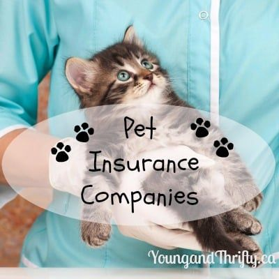 Best Pet Insurance Companies in Canada 2019 James Dylan