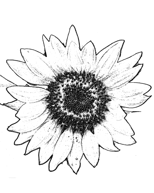 Large Sunflower Coloring Picture
