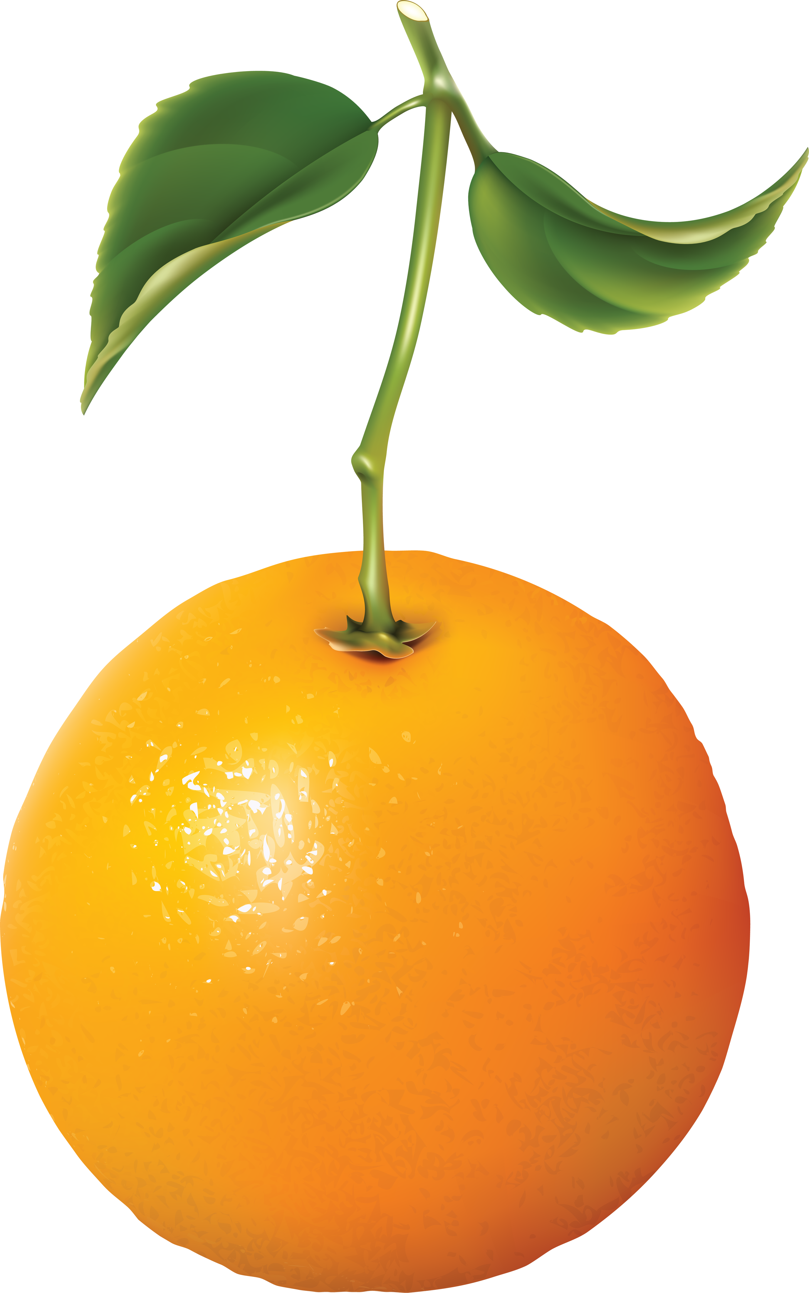 Orange Oranges Png Image Orange Oranges Vegetable Drawing
