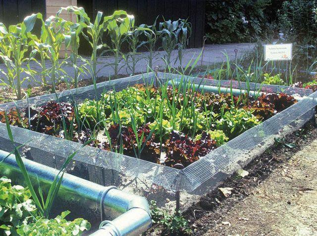 Schneckenzaun Garten Pflanzen Garten Schneckenzaun