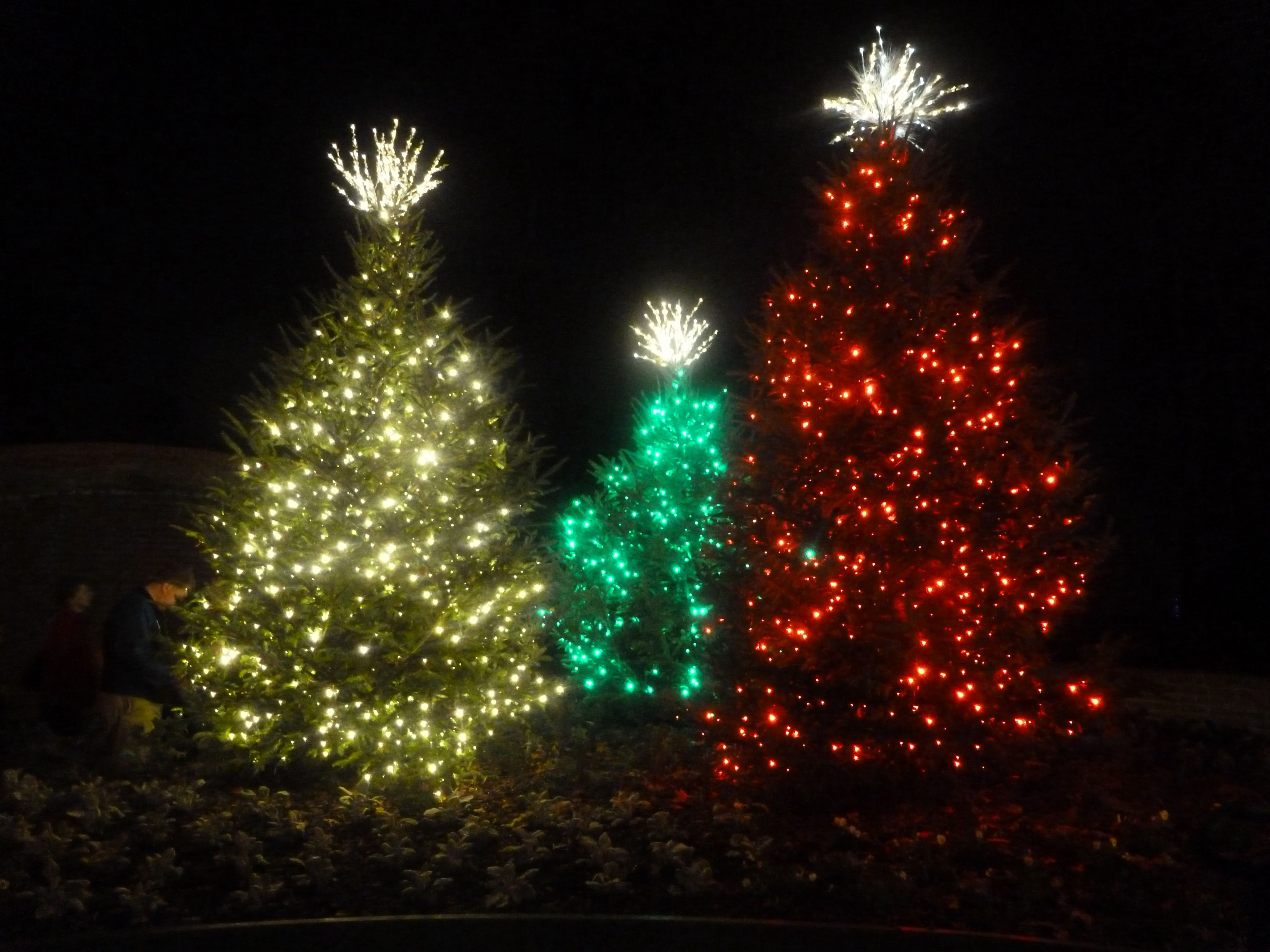Diy outdoor christmas tree lights festive garden lighting collections outdoor christmas mozeypictures Image collections