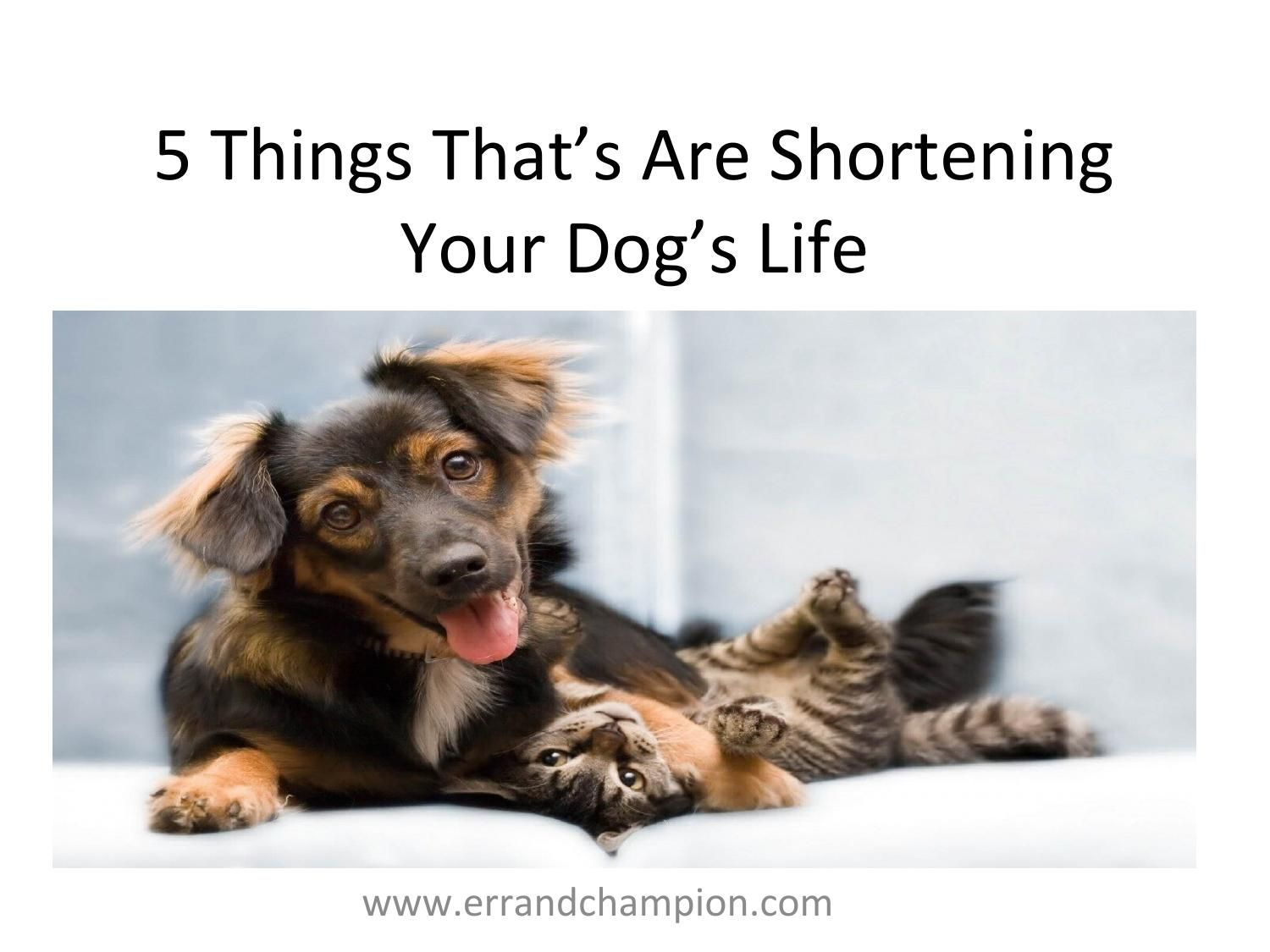 5 Things That are Shortening Your Dog's Life Dogs, Pet