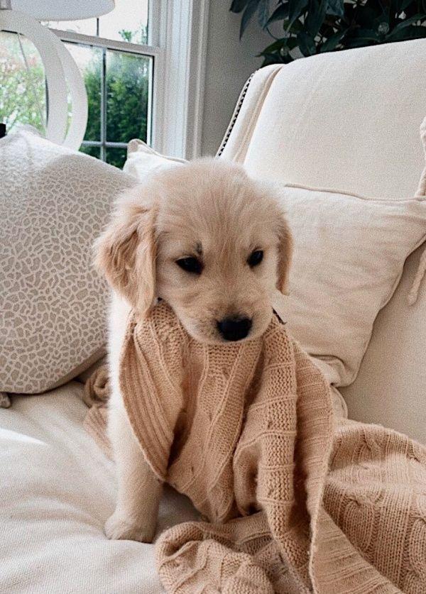 Pin Von Emma Bone Auf Cute Dogs Babyhunde Tiere Hund Niedliche