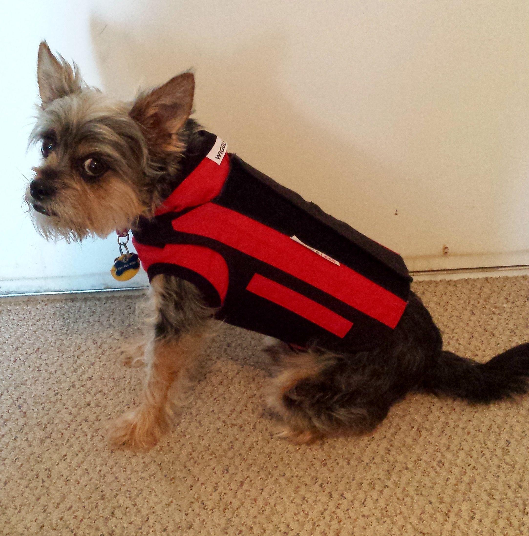 Comfort Shirt And Brace Wiggleless Dog Back Brace Family And