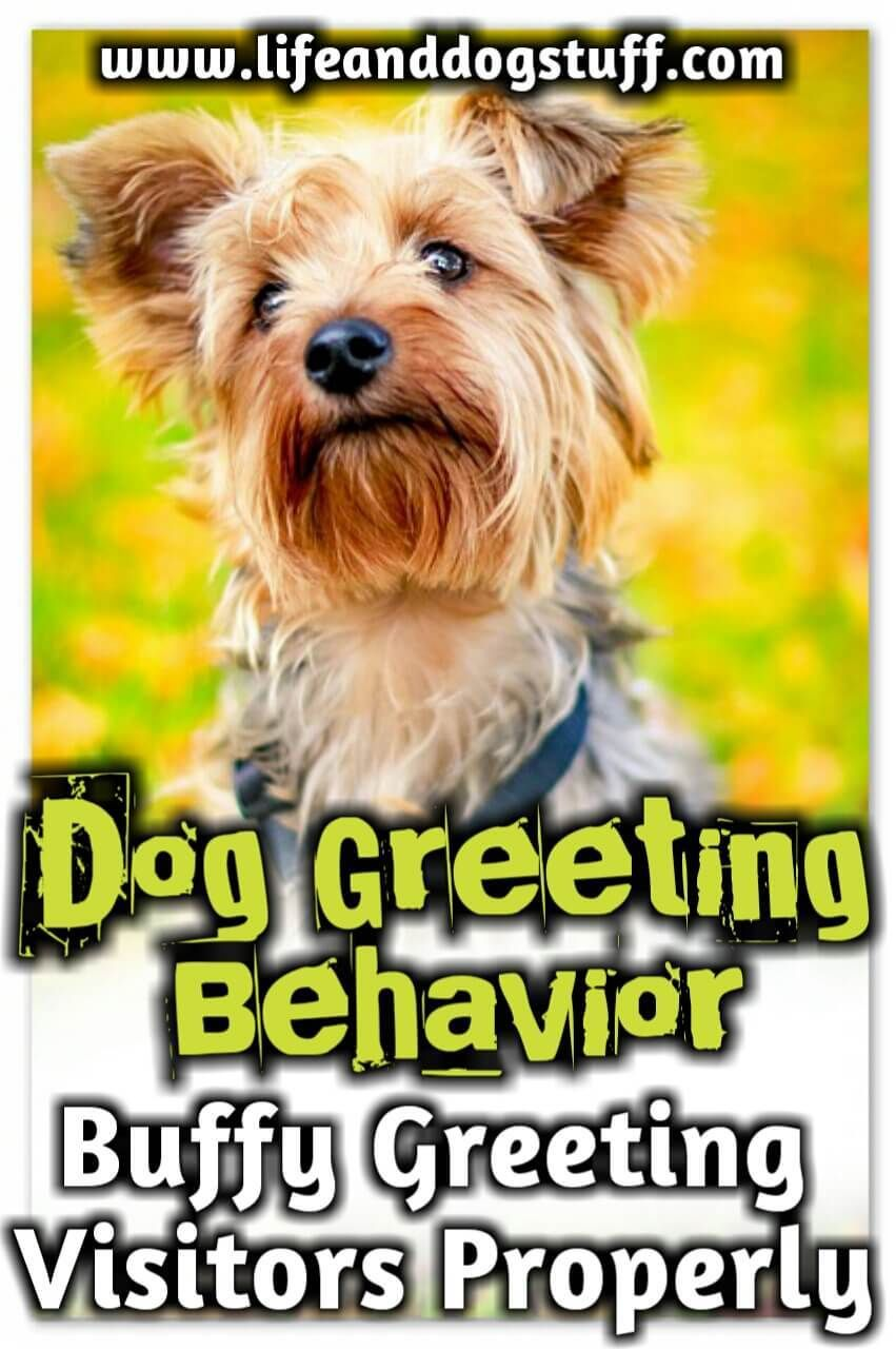 Dog Greeting Behavior Buffy Greeting Visitors Properly Dog Lovers Dog Quotes Funny Funny Dogs