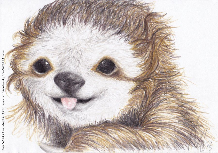 Sloth Pencil Drawing On Deviant Art By Teufelskatze Sloth