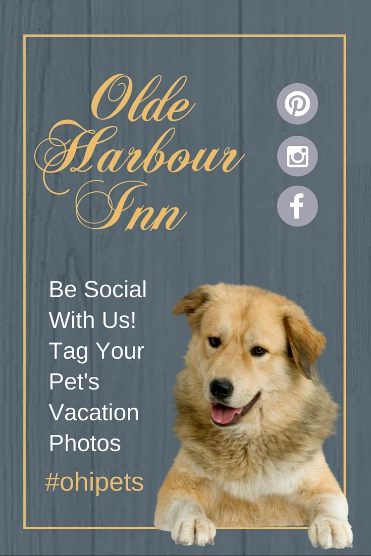 Dog Friendly Places In Savannah Dog Friends Savannah Chat Dog Friendly Vacation