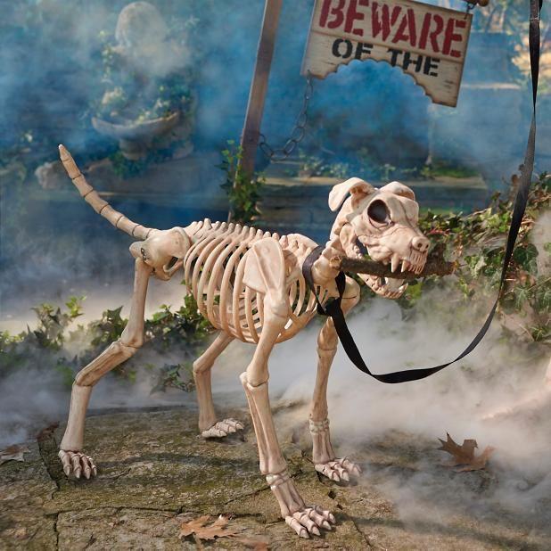 Shadow the Skeleton Dog on Leash Halloween Pinterest Halloween