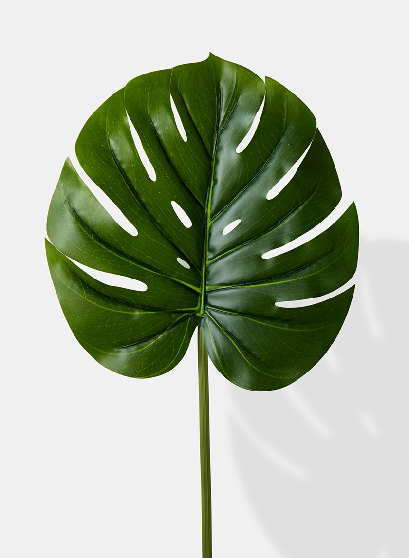 Real Touch Artificial Monstera Leaf Tanaman Hijau Seni Dinding Buatan Sendiri Hijau Nature and flora vector footage of palm tree leaves. real touch artificial monstera leaf
