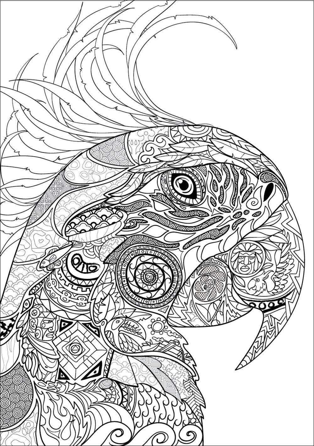 Nouveau Bestiaire Extraordinaire 100 Coloriages Anti Stress Uk Jean Luc Guerin 9782013236621 Books Coloring Pages For Grown Ups Animal Coloring Pages Bird Coloring Pages