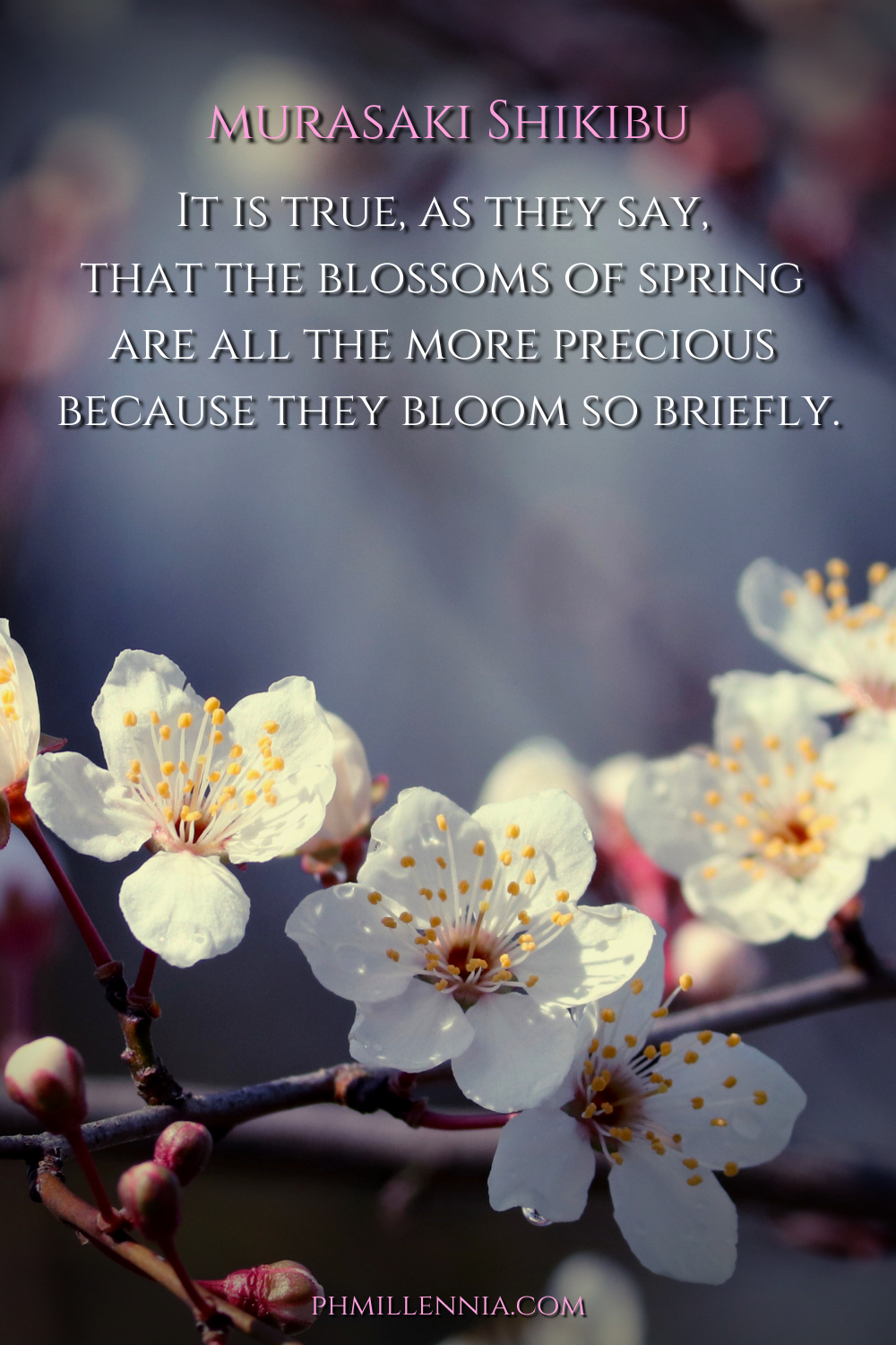 50 Beautiful Brilliant Quotes About Cherry Blossoms Sakura Quotes Sayings Phmillennia Com In 2021 Cherry Blossom Quotes Blossom Quotes Brilliant Quote