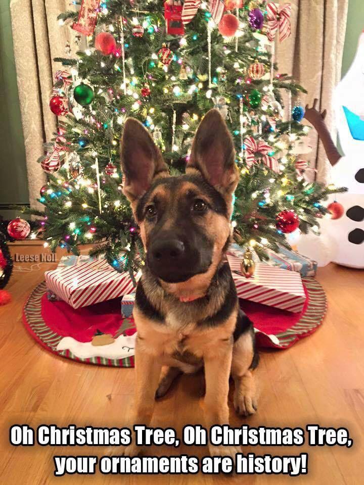 German Shepherd Christmas Memes