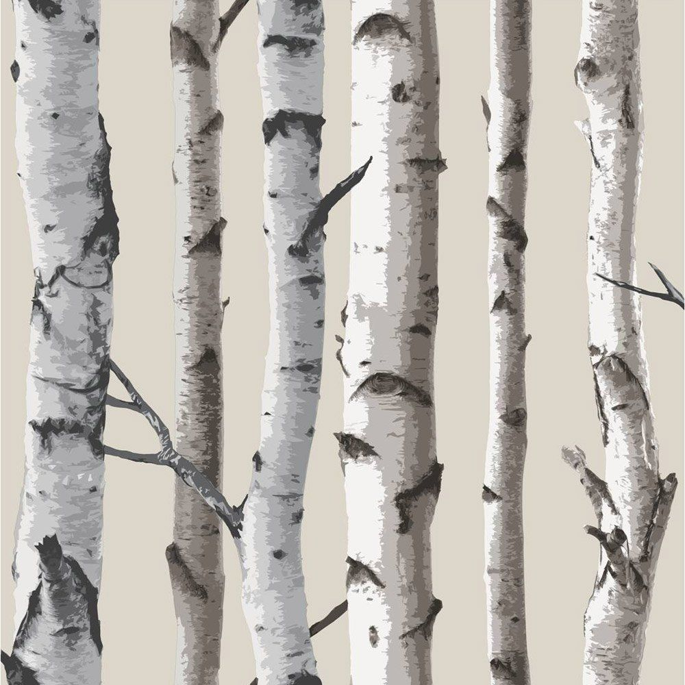 Intriguing Birch Tree Neutral Wallsorts For Birch Birch Birch