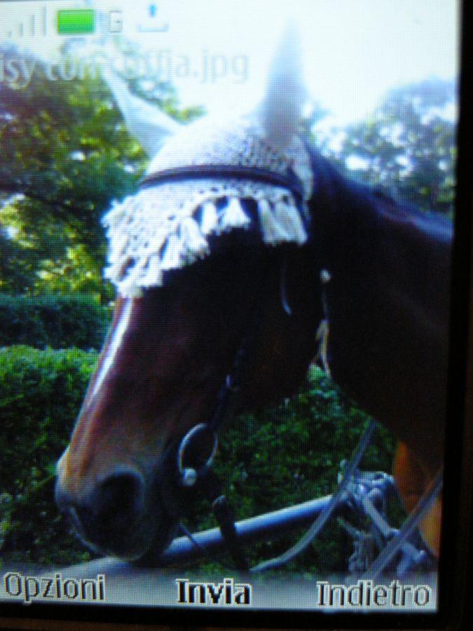 Crochet Horse Fly Bonnet Pattern Crocheted Horse Fly Bonnet