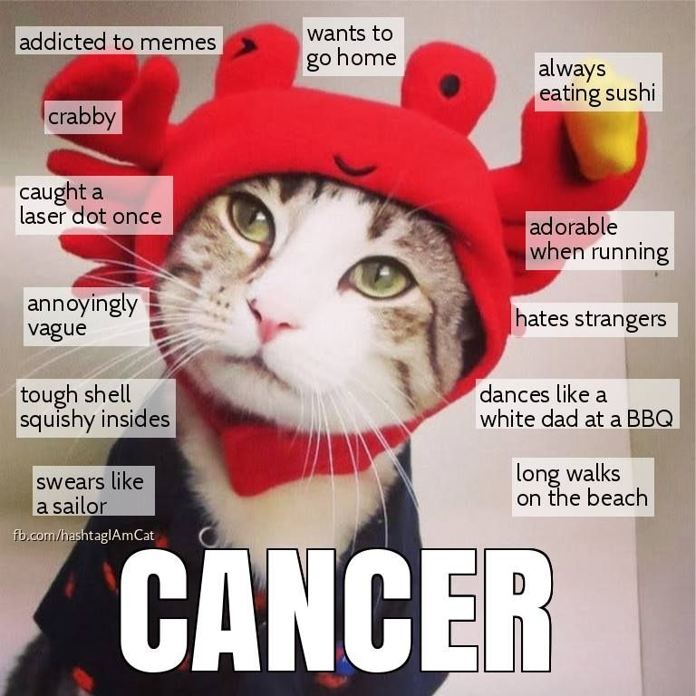Zodiac Cats Zodiac Cancer Zodiac Signs