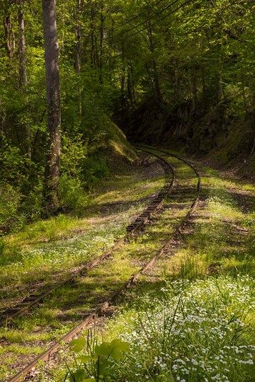 Overgrown Abandoned Rail Line, North Carolina by Jaynes Gallery / Danita Delimont #overgrownaesthetic