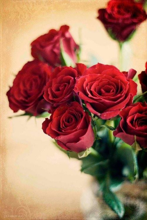 Mona Mina Beautiful Roses Roses Only Red Roses