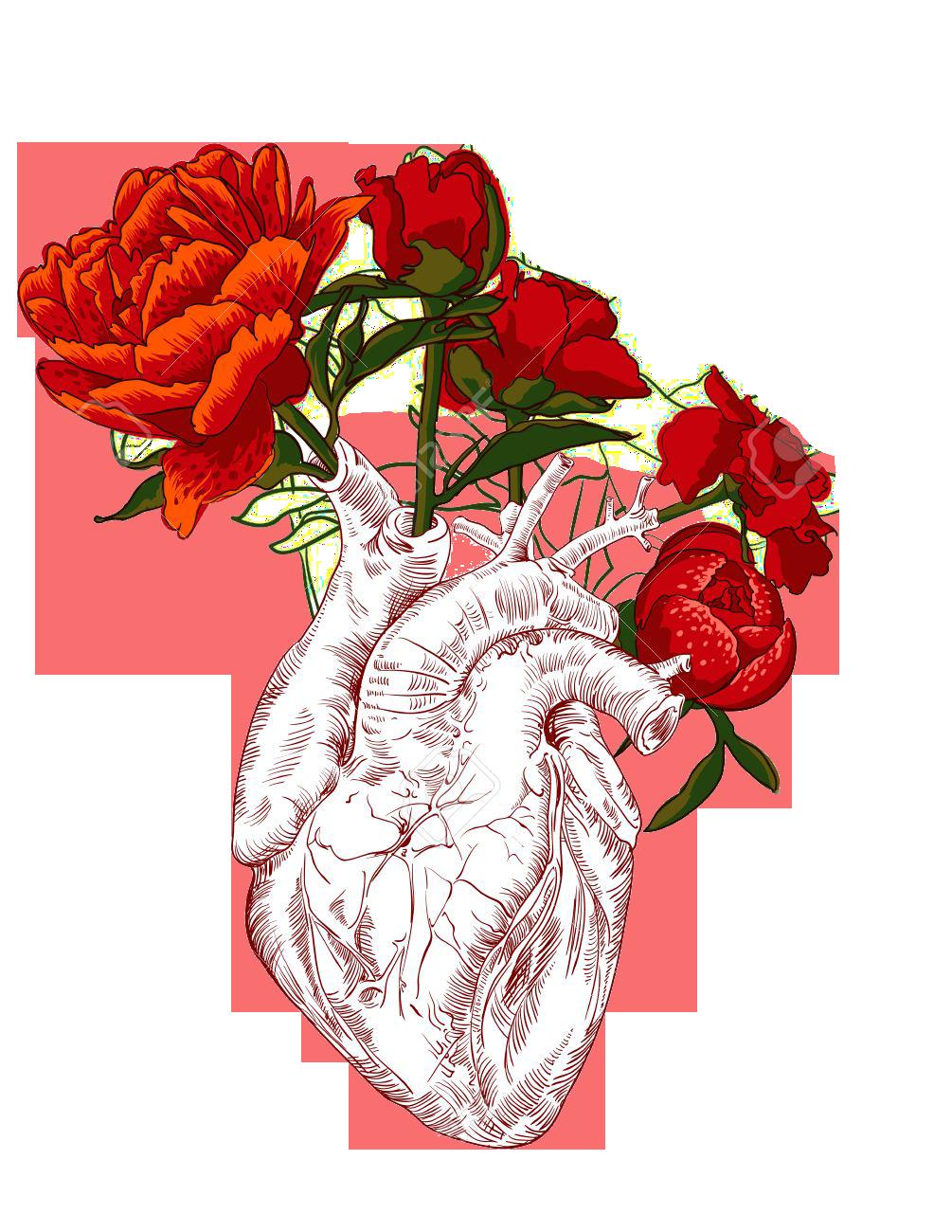 Heart Illustration Art Human Heart Art Flower Drawing Human Heart Drawing
