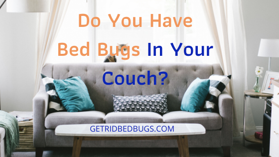 Bed Bugs In Couch How To Find And Destroy Them Fast Get