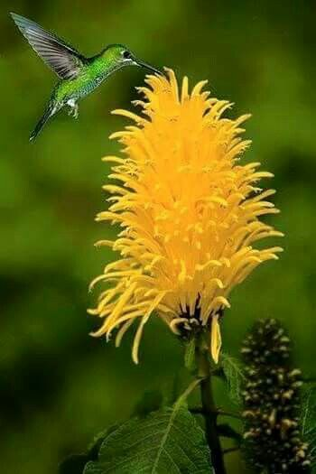 Hummingbird ! | Beautiful birds, Hummingbird, Birds