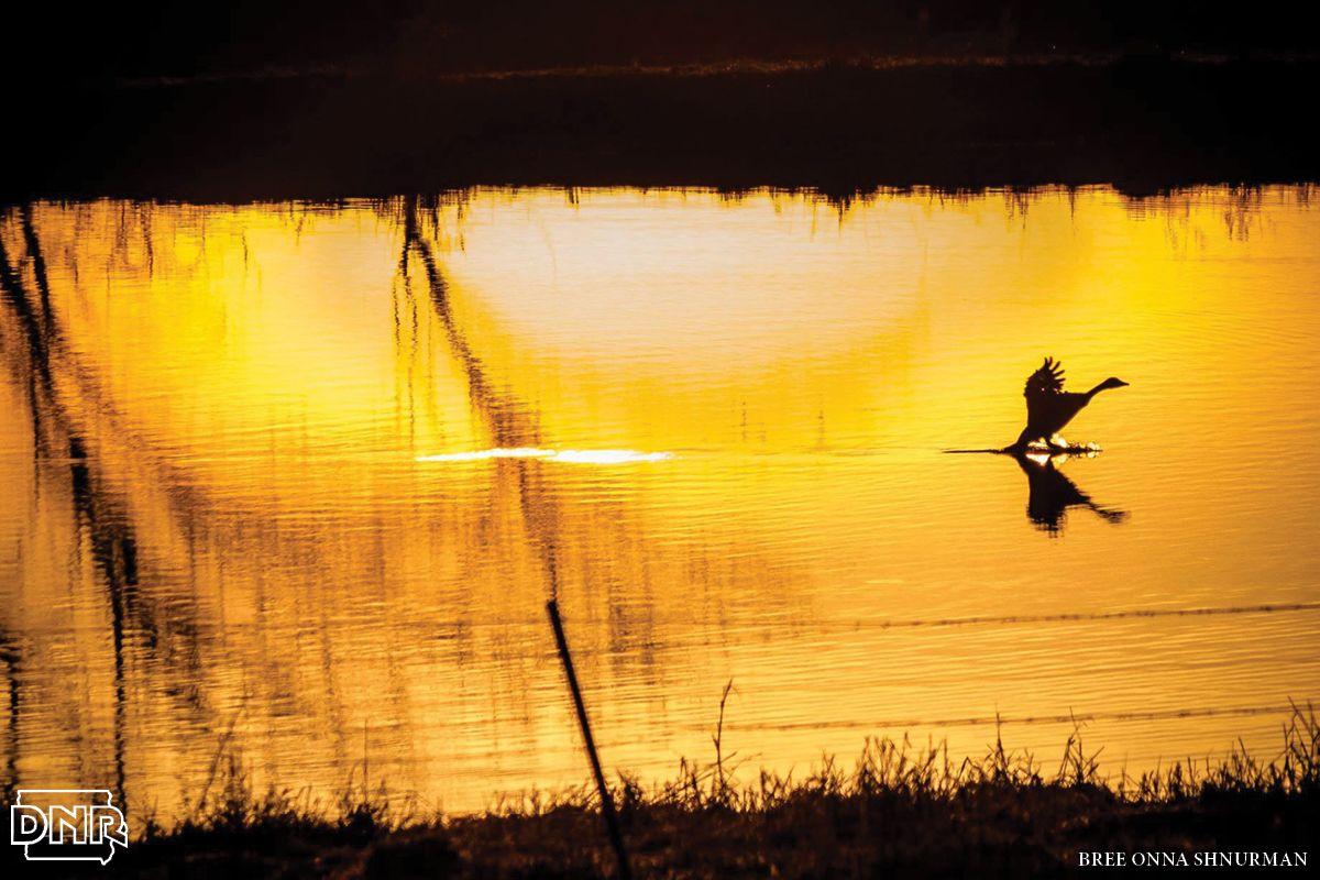 Waterfowl & Wetlands Wetland, Environment, Environmental