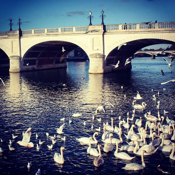 Kingston, Surrey - @yauzaa- #webstagram