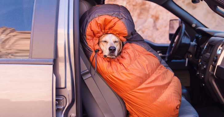 Man Takes His Rescue Dog On Awesome Adventure Trip Around The USA. This Is Epic!