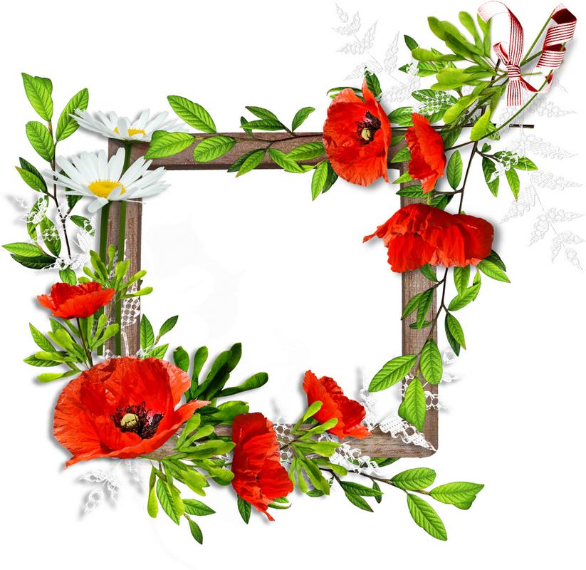 Cadres encadrements frame cadres pinterest for Cadre floral mural