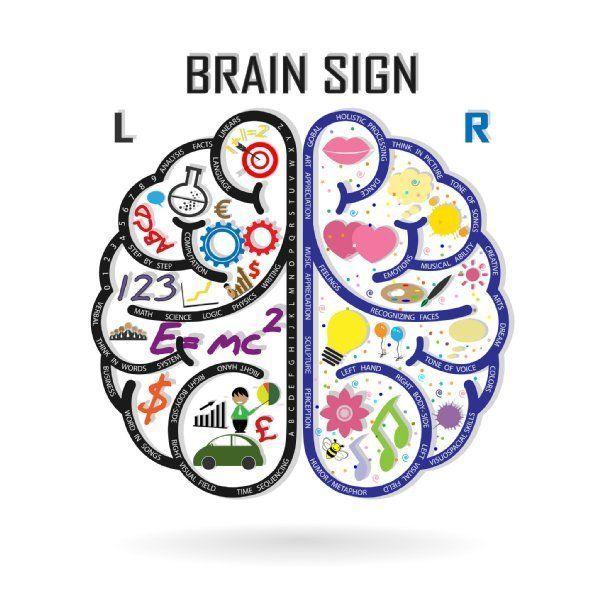の 右脳 と 働き 左脳 右脳と左脳はどう違うの?