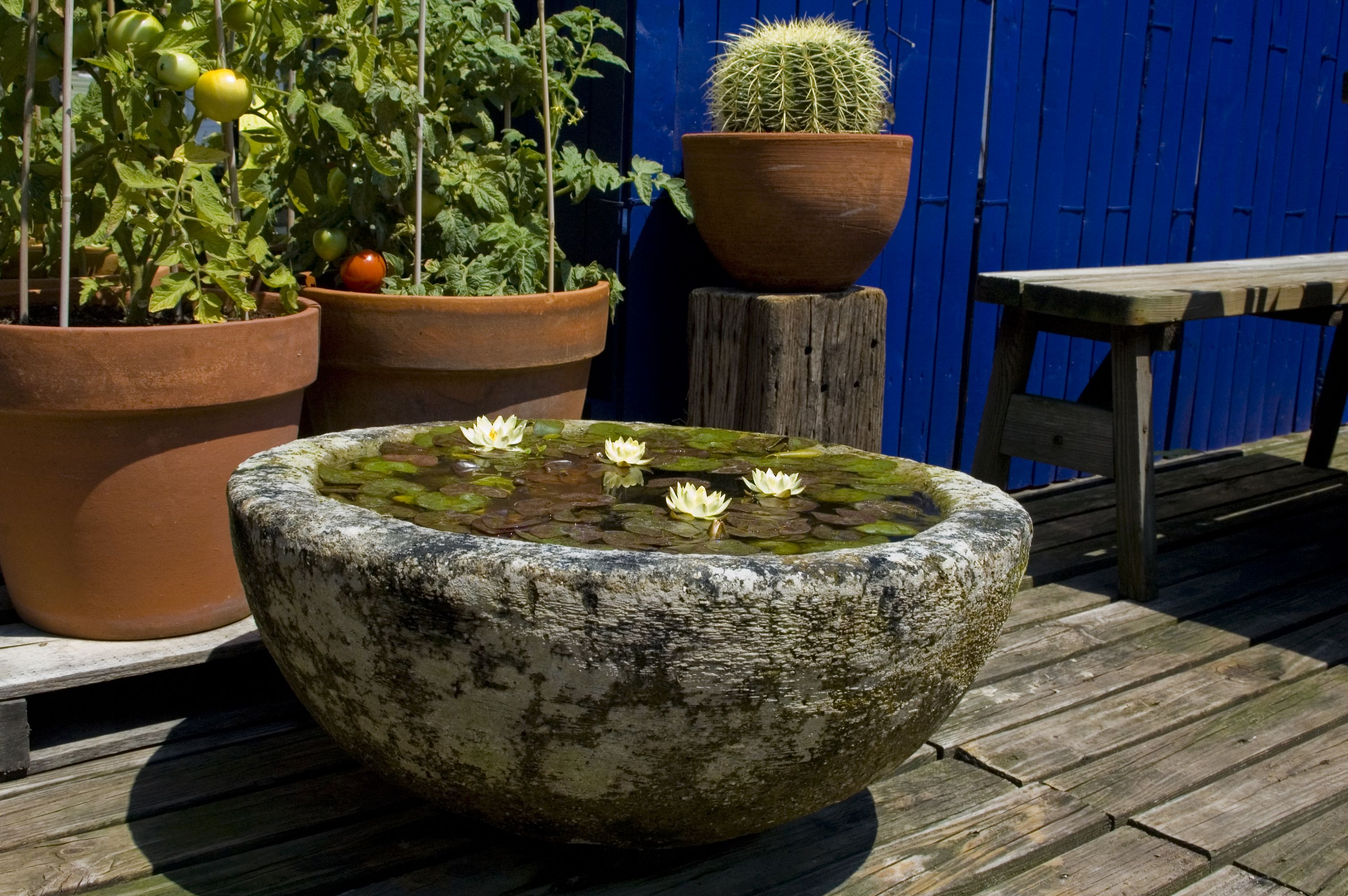 Water garden bowl planted with Helvola dwarf water lily | Water ...