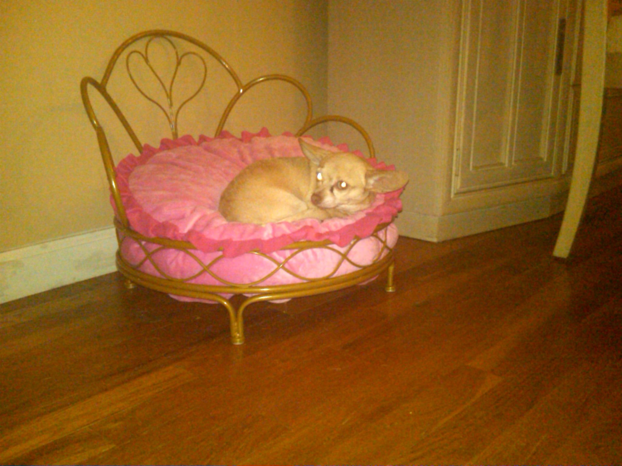 New Customer Find by Margie Dog bed, Pet bed, Pets