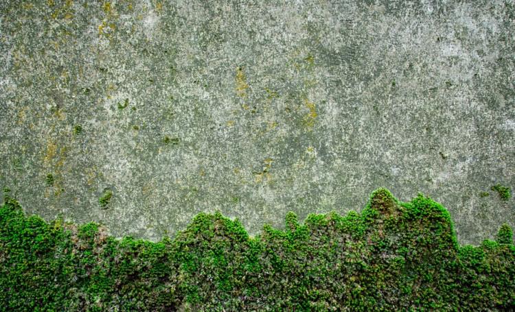 Comment Enlever De La Mousse Et Du Lichen Naturellement En 2020 Nettoyer Terrasse Mousse Produit Anti Mousse