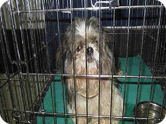Pin By Jocelyne Fulcher On Adoptables Save A Shelter Pet Pinterest