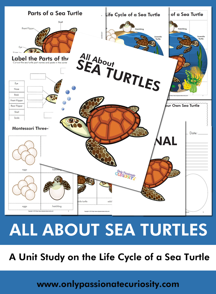 All About Sea Turtles Turtle Turtle Life Cycle Turtle Activities