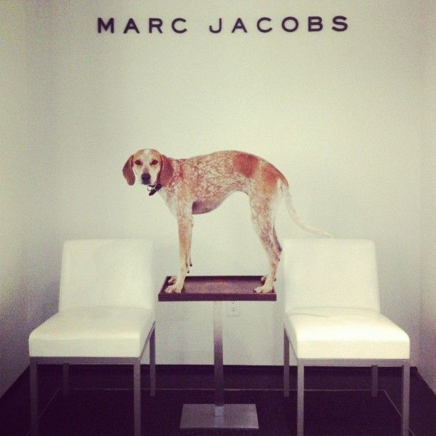 Maddie at Marc Jacobs International, via @Abbey Adique-Alarcon Berro