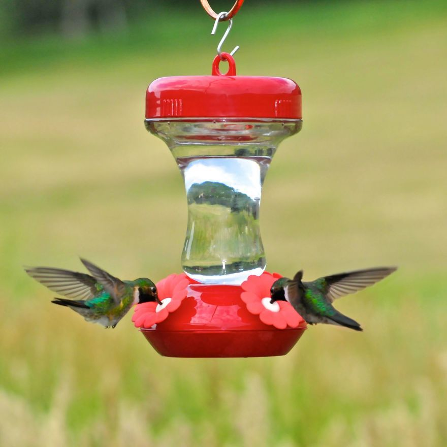 19 Things To Know About Hummingbirds Glass hummingbird
