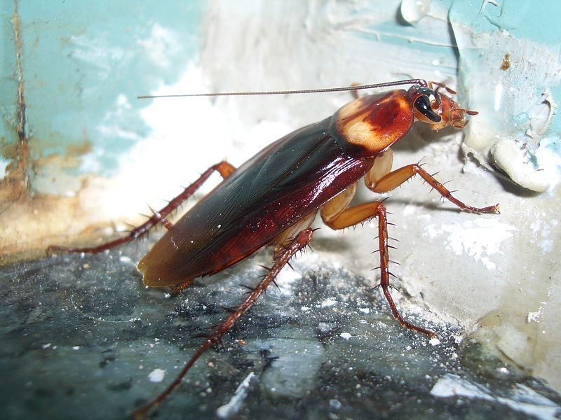 Man dies after live roach-eating contest in US | Metro