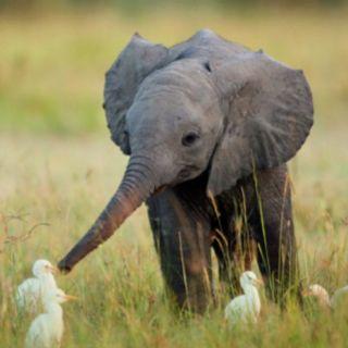 Baby elephant:)
