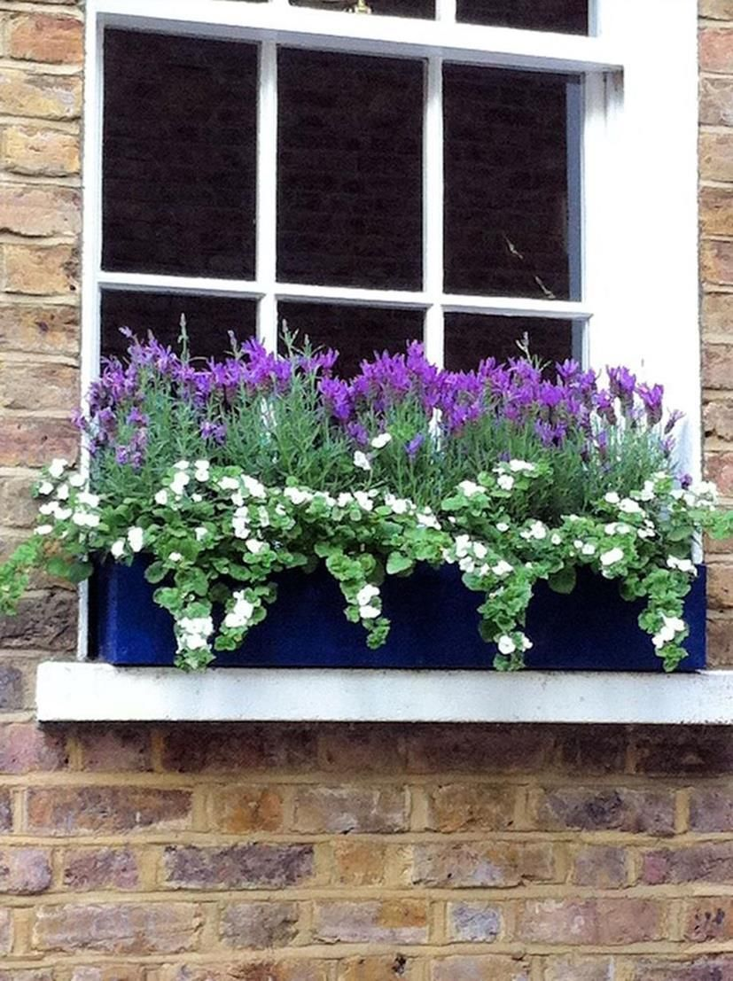 window planter box flower ideas