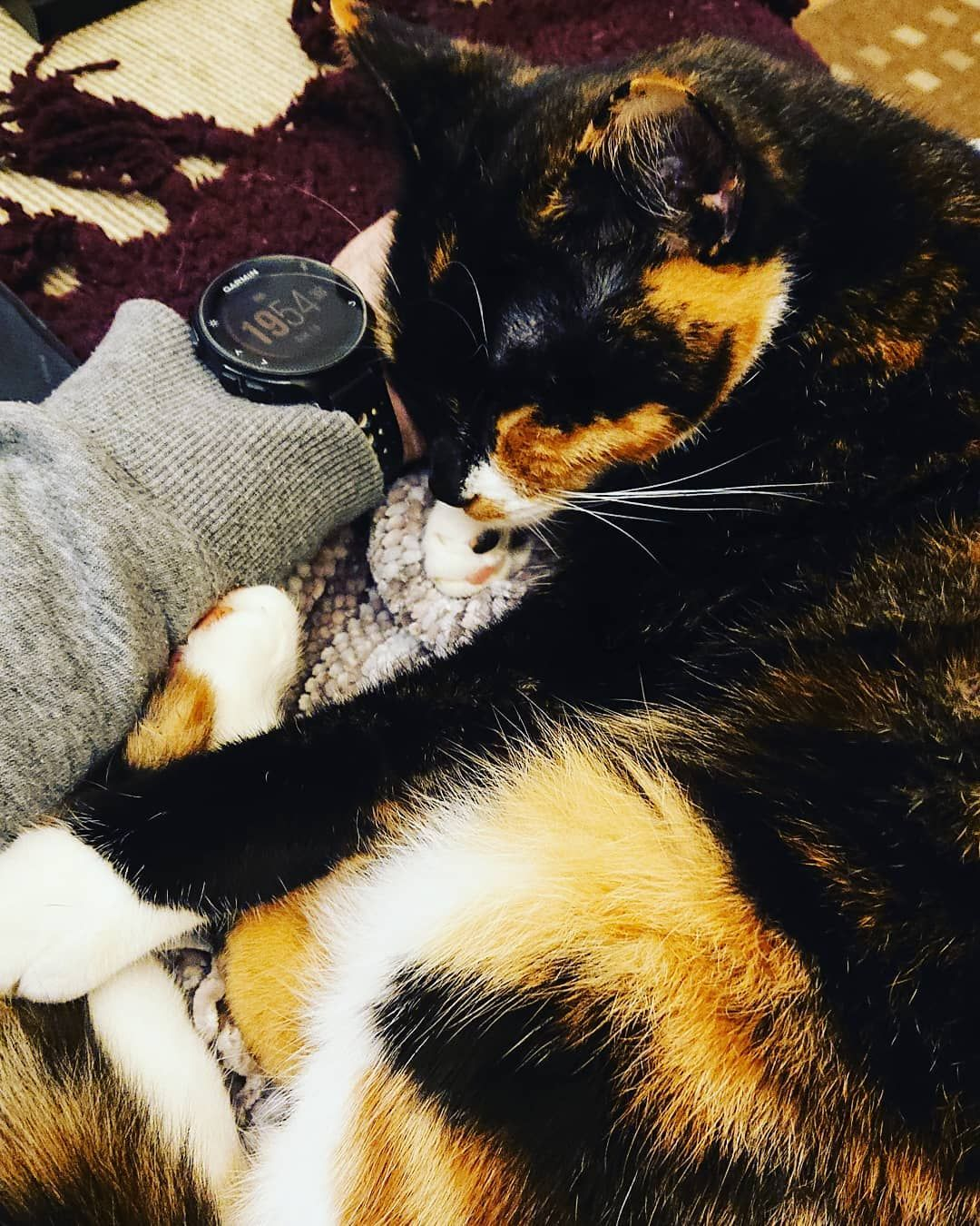 It S Another Crazy Saturday Night Cats Catsofinstagram Instacats Calicocat Tortoiseshell Indy Cat Day Cats Of Instagram Calico Cat