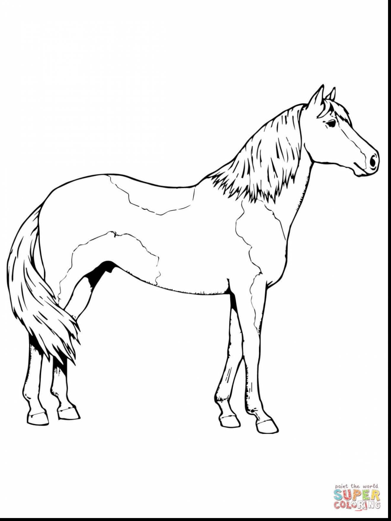 superb paso fino horse coloring page with printable horse coloring ...