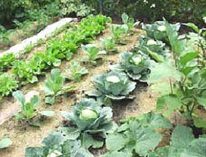 No Till Gardening