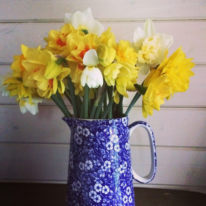Homegrown daffodils british flowers pinterest daffodils daffodils izmirmasajfo